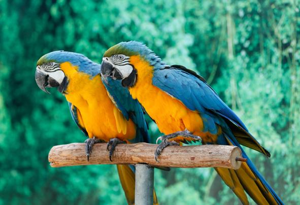 Exotic Bird Show - Creek Park